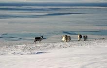 Randonnée motoneige au Tempelfjorden vers le glacier de Tunabreen